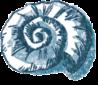 shaking-shell